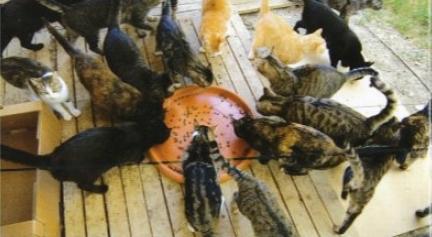 colonia-felina-gatti-mangiano