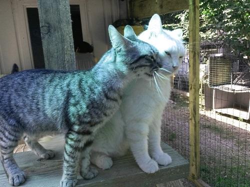 gatti-fanno-coccole