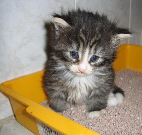 gatto-diarrea