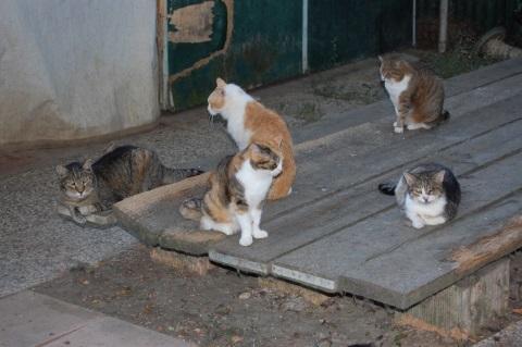 gatti-in-esubero