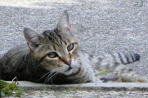 gatto-accaldato