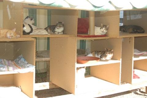 spazi-gatti